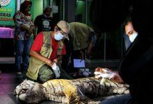 Photo of Seekor Harimau Sumatera Ditemukan Tewas Terjerat Kawat